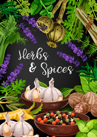 Herbs and spices in frame of food condiments and seasonings. Pepper, basil and rosemary, thyme, parsley and nutmeg, dill, celery and garlic, mint, sorrel and lemongrass, lavender and poppy