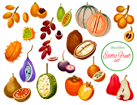 Exotic fruits and tropical berries. Dates, star apple and cantaloupe, persimmon, kiwano and bael, miracle fruit, medlar and sapodilla, granadilla, chompoo and curuba, cupuacu, marang and akebia