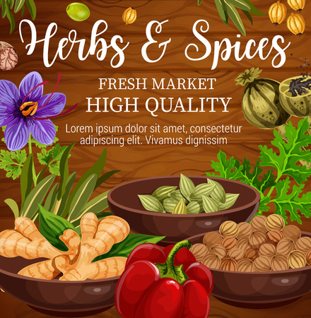 Herbs, spices and vegetables, food seasonings and condiments on wooden background. Vector parsley, pepper and ginger root, oregano, saffron flower and basil, cardamom, nutmeg and coriander seed