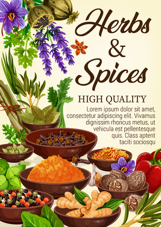Spices, condiments and seasonings with culinary herbs of grocery store. Vector pepper, garlic and parsley, saffron, nutmeg and cardamom, ginger root, clove and rosemary, lavender and poppy flower seed