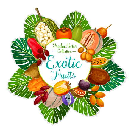 Exotic fruits and tropical berries of persimmon, cantaloupe and date, star apple, granadilla and kiwano, bael, akebia and marang, chambakka, miracle fruit, cupuassy and gandaria. Food and drink vector