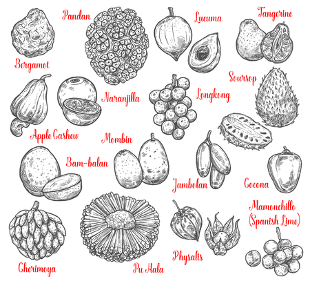 Tropical fruits sketches of exotic apple cashew, bergamot and cherimoya, physalis, tangerine and soursop, pandan, jambolan and longkong, mombin, puhala and mamoncillo, cocona and lucuma. Vector sketch