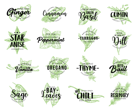 Spices and herbs or organic seasonings sketch lettering. Vector calligraphy for ginger, cinnamon or basil and cumin with anise star seed and peppermint, tarragon flavoring and dill or vanilla