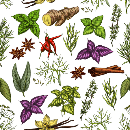 Spices and herbs seamless pattern of organic seasonings. Vector background or peppermint, anise or basil and vanilla or cinnamon, ginger and chili pepper with parsley or dill and rosemary or sage Stock Illustratie