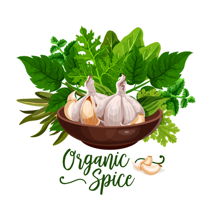 Organic spices poster of cooking herbs and herbal ingredients. Vector design of garlic, celery or parsley and dill, spinach or sage or tarragon and bay leaf in kitchen bowl