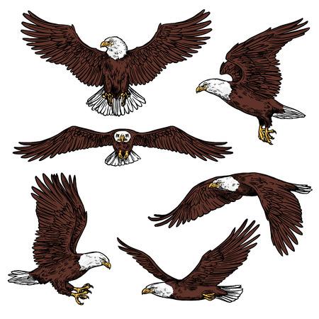 Iconos de águila calva volando con alas extendidas vista frontal y lateral. Vector de aves rapaces o aves depredadoras, buitre águila rapaz, halcón o halcón para ornitología o diseño de zoológico y símbolo de poder Ilustración de vector