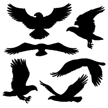 Aquila volante, falco e falco icone di uccelli sagoma nera. Predatore di uccelli vettoriali in pose volanti per simboli araldici o disegno del tatuaggio. Animale selvatico come segno di potere e libertà Vettoriali