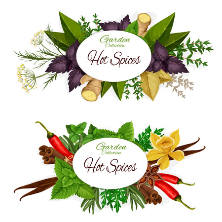Hot spices icons with herbs and plants around sign. Vector ginger and basil, dill and vanilla, chili pepper and mint, cinnamon and arugula, bay leaf. Seasoning and dressing for salads and dishes