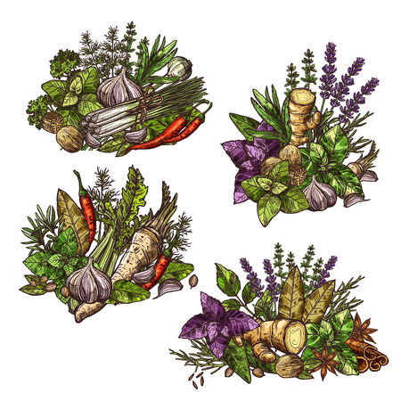 Herbs and spices in heaps or bunches. Vector seasonings and cooking condiments ginger and mint, cinnamon and basil, dill and cumin, chili pepper and garlic, sage and bay leaf, lavender and leek sketch Векторная Иллюстрация