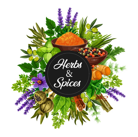 Épices et herbes assaisonnements biologiques et bouquet d'arômes de cuisine. Olives vectorielles, chicorée et lavande, vanille et cannelle, citronnelle ou gingembre, poireau et poivre avec curcuma ou curry dans un bol