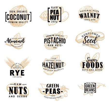 Lettrage de croquis de noix et de graines de fruits. Marché agricole vectoriel et calligraphie de dessert, arachide ou pistache et amande, noix de coco et noisette ou noix et pois verts aliments crus sains