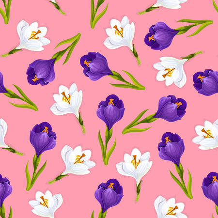 Crocus flowers pattern . Vector seamless design of white and pink purple floral ornament with blooming crocuses buds and leaves, wedding or love romance embellishment