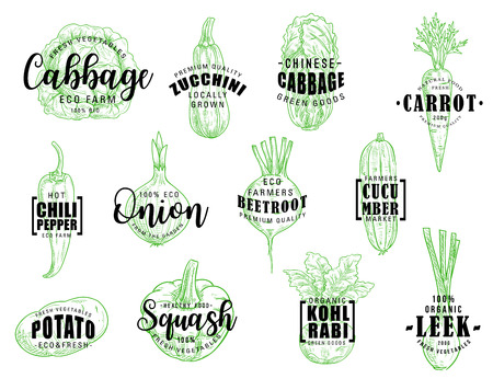 Vegetables and green veggies, vector sketch lettering. Vector cabbage, kohlrabi and zucchini squash, Chinese napa cabbage and carrot, chili pepper and potato, onion and leek, beetroot and cucumber Illustration