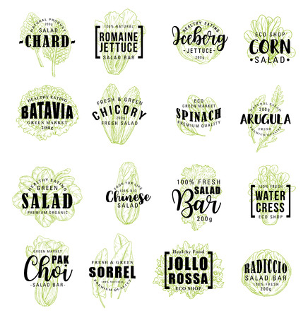Vegetable lettering icons, farm veggies sketches. Vector chard and lettuce, corn and batavia, radicchio and spinach, iceberg salad. Water cress and pak choi, sorrel and jollo rossa 向量圖像
