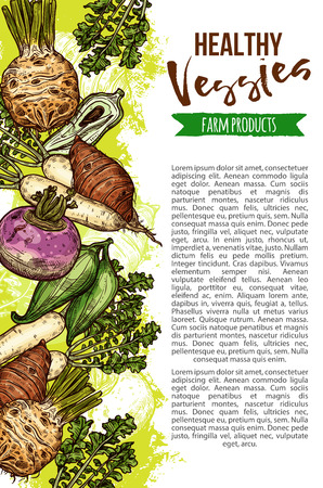 Exotic vegetables from natural farm, veggies sketch. Vector celery and parsley, radish and beetroot, sweet potato and chickpea, rutabaga and cassava, little corn and jicama, chayote and taro roots Stock Illustratie
