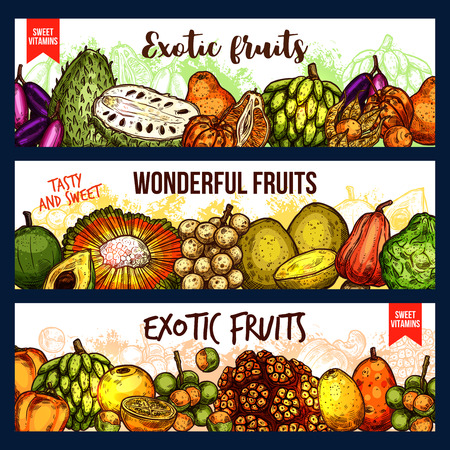 Exotic fruits vector sketch banners. Bergamot and cashew, jackfruit and sugar apple, chompoo and soursop, longkong and dacryodes, citron and cocona, lucuma nad naranjilla, cherimoya and pandan fruit 免版税图像 - 112262445