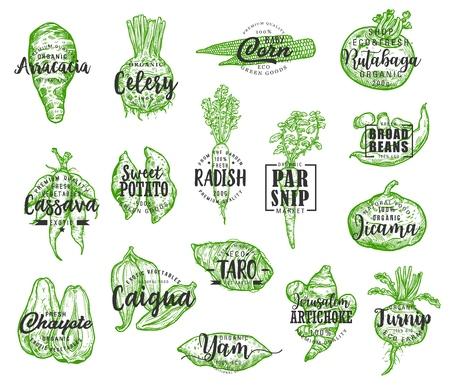 Alimentos orgánicos, siluetas de verduras vectoriales y letras. Arracacia y apio, maíz y colinabo, mandioca y papa, rábano y chirivía, jícama y chayote. Vegetal de alcachofa y nabo Ilustración de vector