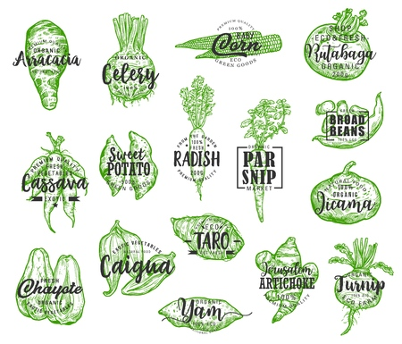 Organic food, vector vegetables silhouettes and lettering. Arracacia and celery, corn and rutabaga, cassava and potato, radish and parsnip, jicama and chayote. Artichoke and turnip veggie