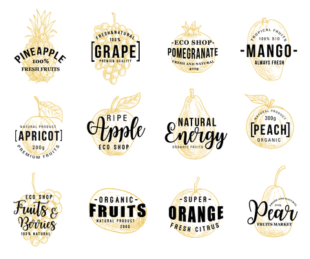 Fruits and berries silhouettes sketches with lettering, vector. Pineapple and grape, pomegranate and mango, apricot and apple, peach and orange, kiwi or pear. Natural vegetarian food vector Vetores