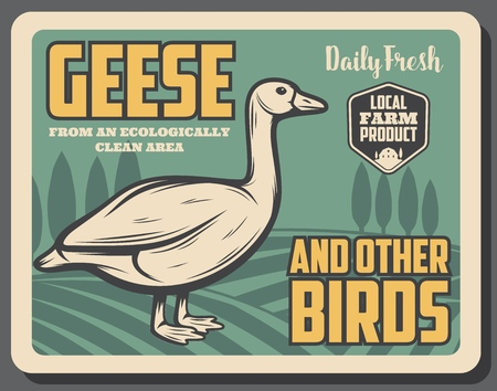 Goose bird on the field retro poster, farm. Domestic geese and other birds banner of animal with wings and beak. Natural fat poultry for dishes and food Illustration