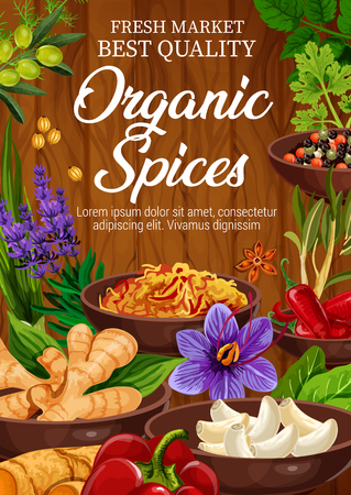 Organic spices and herbs market store or shop. Vector lavender and ginger, garlic and turmeric, basil and olive, chili and bell pepper, parsley and dill. Condiments and seasonings for cooking
