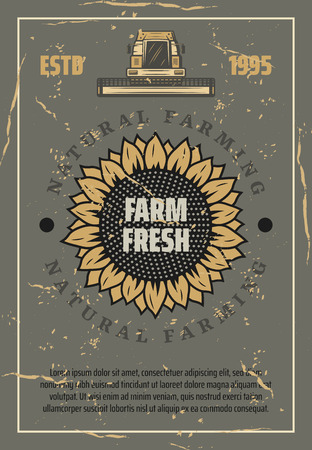 Farming, agriculture industry vintage vector poster. Sunflower bud full of edible seeds and combine machine for harvest. Old scratched paper
