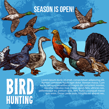 Birds hunt open season vector poster. Hunting sport adventure design of wild birds duck and peacock, grouse or blackcock and capercaillie with goose, quail and hazel-hen, pheasant and partridge Çizim