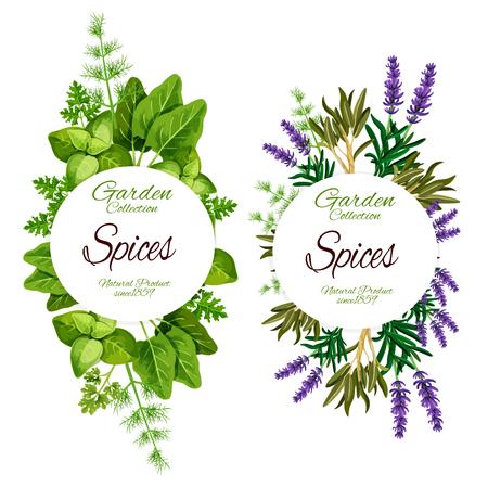 Spezie ed erbe aromatiche di lavanda, salvia o maggiorana e foglia di salvia. Cibo biologico naturale vettoriale di spinaci e acetosa, rosmarino e dragoncello con aneto e prezzemolo per condire l'insalata Vettoriali