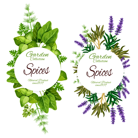 Spices and herbs of lavender, sage or marjoram and sage leaf. Vector natural organic farm food of spinach and sorrel, rosemary and tarragon plant with dill and parsley for salad dressing
