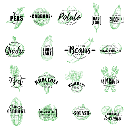 Vegetables sketch lettering icons. Vector veggie green pea, cabbage and potato, radish with zucchini and garlic, eggplant or champignon, beet with broccoli and kohlrabi, squash and asparagus Imagens - 112262629