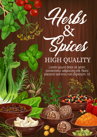Herbs and spices, culinary ingredients and cooking herbal spicy seasonings. Vector garlic, basil or Indian turmeric curcuma and saffron, celery or tomato and poppy seed with anise and chili pepper Ilustracja