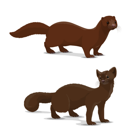 Mink and sable dark-colored carnivorous mammal icon. Wildlife vector animal with rich glossy brown coat that looks silky. European and american mink and sable, isolated hunting vector animal Illustration