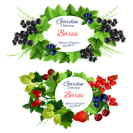 Fruits and berries garden harvest posters isolated. Green leafy branches with round badge for natural organic food vector. Strawberry and raspberry, blueberry and red currant, gooseberry and briar