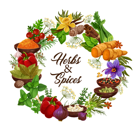Spices and herbs, vector seasonings and condiments. Anise and oregano, rosemary and thyme, ginger and vanilla, mint and cinnamon, basil and dill, cumin and bell pepper, sage and bay leaf seasonings