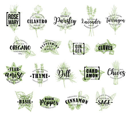 Spice and herb vector lettering. Rosemary and cilantro, parsley and lavender, tarragon and oregano, peppermint and ginger, cloves and anise, thyme and dill, cardamon and chives, basil icons with words