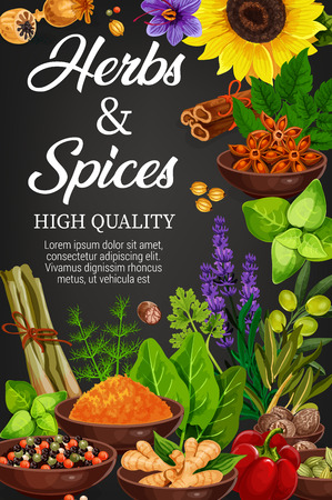 Seasoning herbs and spices, vector condiments. Rosemary and thyme, basil, dill and parsley, sunflower and bay leaf, lavender or mint, curry, cinnamon, bell pepper and lemongrass, ginger and olive Stock Vector - 127343978