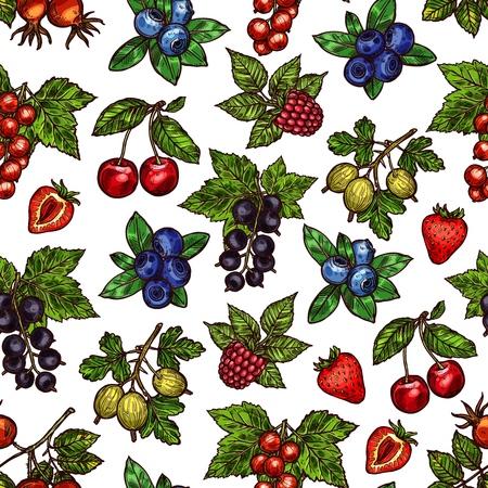 Beeren auf Zweig- oder Stammskizzen in nahtlosem Muster. Heckenrose und schwarze Beere, rote oder schwarze Johannisbeere, Heidelbeere und Himbeere, Kirsche und Erdbeere, Stachelbeere. Natürliches Lebensmittel im endlosen Texturvektor Vektorgrafik