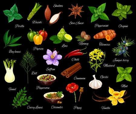 Spice and herbs, seasonings and condiment. Vector perilla and wasabi, shallot and anise, peppermint and oregano, bay and leaf, paprika and lime. Nutmeg and turmeric, fennel and dill, saffron and chili Illustration