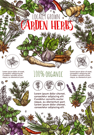 Herb and spice from garden sketch poster with seasonings. Garlic and basil, chili pepper and ginger, cinnamon and poppy, leek and rosemary, anise and dill. Food condiments from market vector