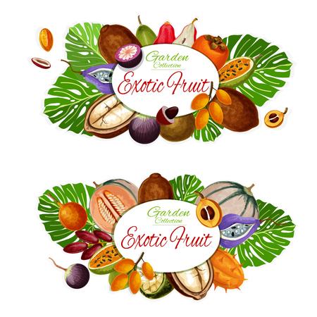 Exotic fruit icons, vegetarian food, natural product. Vector mangosteen and sapodilla, caimito and longkong, akebia and kiwano. Loquat and jujube, persimmon and pomelo, jackfruit and water apple Illustration