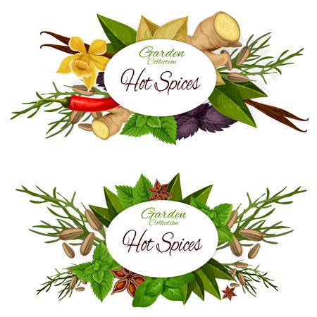 Hot spices icons with seasoning and dressing. Vector of ginger and basil, bay leaf and vanilla, dill and anise, mint and cinnamon, chilli pepper. Herb and condiments for cooking badges vector isolated