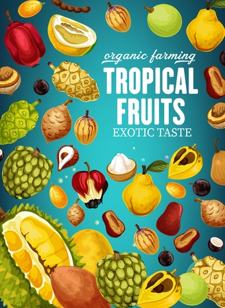 Fruits of tropical origin poster for natural organic food. Durian and cherimoya, mangosteen and litchi, sapodilla and sugar apple, quince and ackee. Canistel and ciamito, marula and canistel vector Illustration