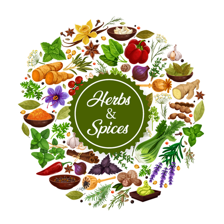 Seasonings icon of herbs and spices for cooking. Grocery store with garlic and saffron, cardamom, ginger, lavender and vanilla. Bell or chili pepper and basil, bay leaf and cinnamon and parsley vector Illustration