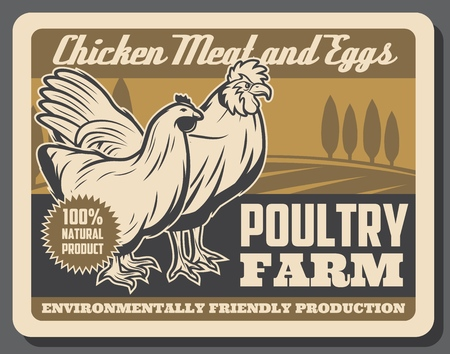 Poultry farm chicken meat and eggs vector design with hen and rooster. Illustration