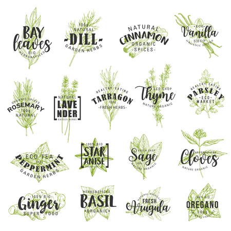 Herbs and spices vector lettering with vegetable seasonings and condiments sketches. Parsley, rosemary and thyme, basil, mint and ginger, cinnamon, vanilla, anise and dill, food ingredients Stock Vector - 127088313