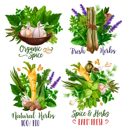 Spices and herbs, organic condiments and food seasonings. Vector parsley, mint and basil, garlic, nutmeg and rosemary, thyme, horseradish and dill, lavender and poppy flower seed. Spice shop Ilustrace