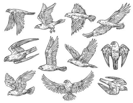 Szkice orła, jastrzębia i sokoła z latającymi ptakami drapieżnymi.