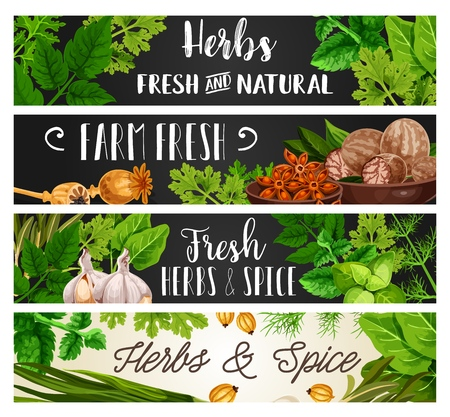 Spices, herbs and food cooking seasonings or organic natural culinary flavorings. Vector parsley, dill or spinach and celery, garlic with nutmeg or poppy seed and sage or tarragon and rosemary