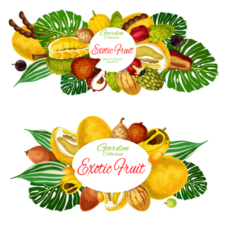 Exotic tropic vector fruits tamarind, jackfruit or pomelo and quince pear. Tropical fruit agriculture and farm market morinda, ackee or champakka apple or pepino and organic jabuticaba or cantaloupe