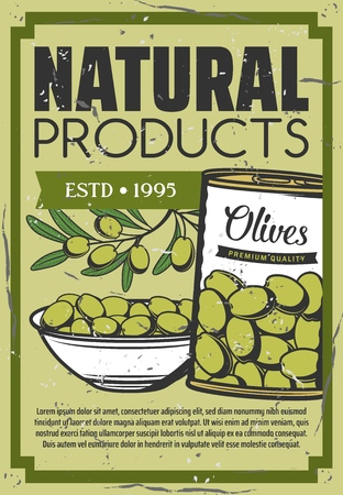 Pickled olives in can, natural organic food snack vintage poster. Vector green olive pickles product in bowl plate, salad and cooking ingredients Zdjęcie Seryjne - 127021783